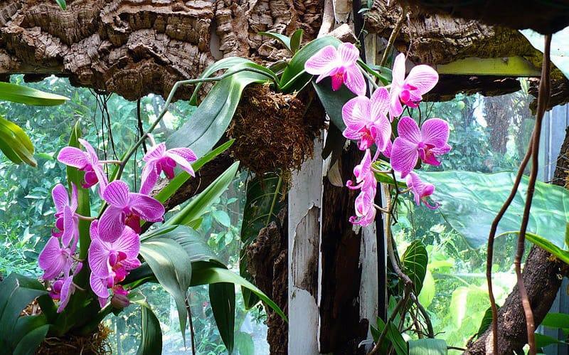 Ogni Quanto innaffiare le Orchidee