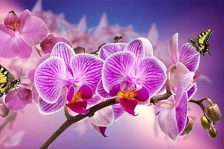 Ogni Quanto bisogna innaffiare le Orchidee?