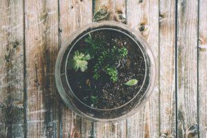 ogni quanto bagnare le piante grasse