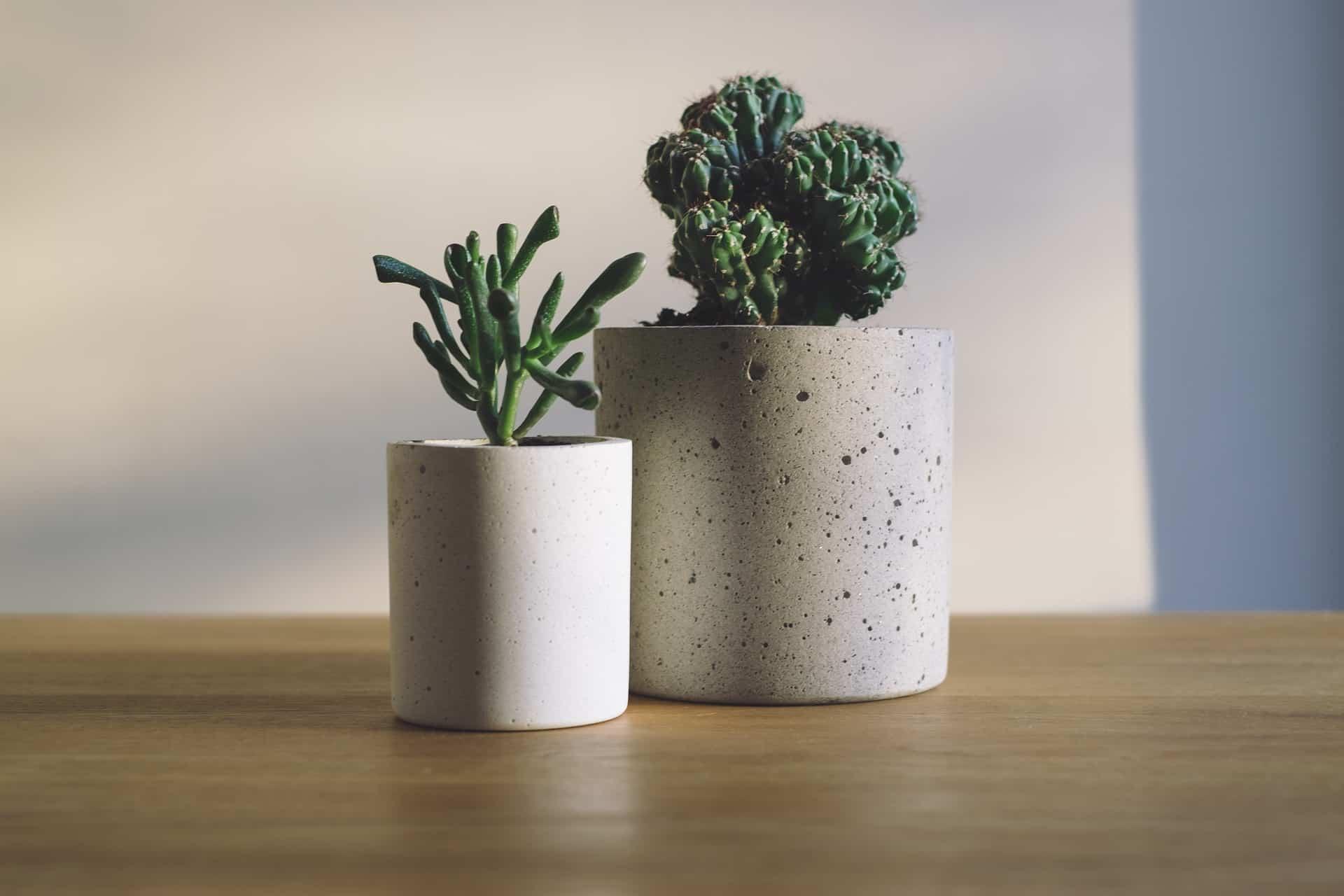 Ogni quanto bagnare le piante grasse : consigli e trucchi