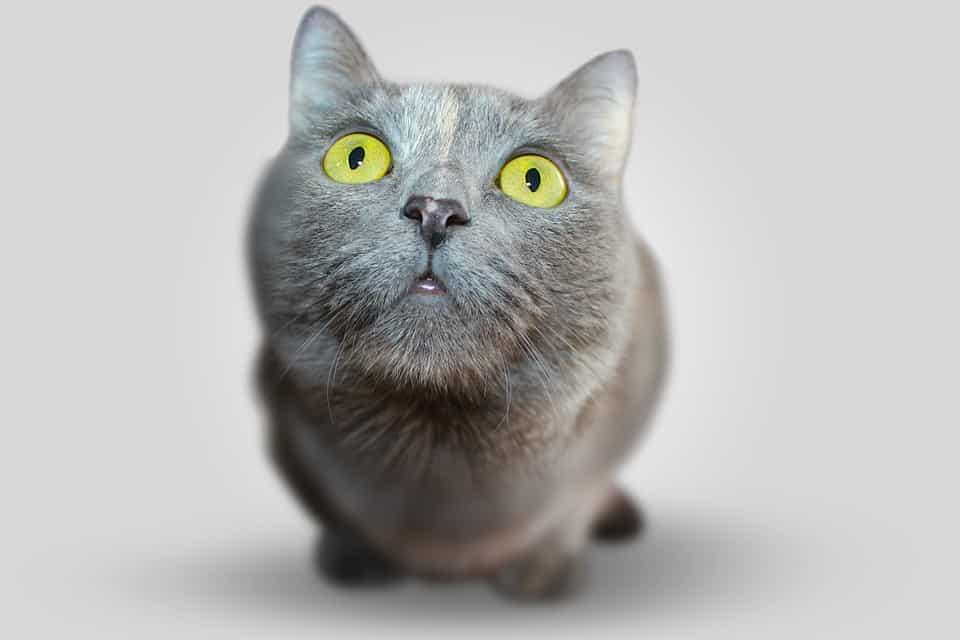 Ogni quanto sostituire la lettiera del gatto