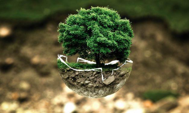 Ogni quanto innaffiare un bonsai : Frequenza