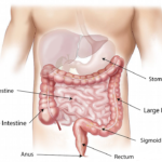Ogni quanto fare la Gastroscopia