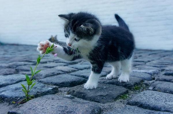 Alcune curiose abitudini dei gatti